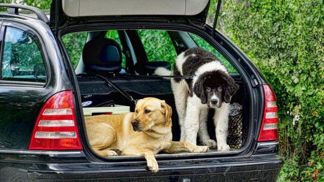車のトランクに置く収納ボックスすすめ